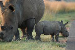 Photos of Africa, Rhino...Save the Rhino.. (43) - stock photo