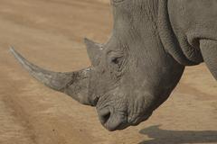 Photos of Africa, Rhino...Save the Rhino.. (58) - stock photo