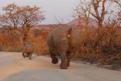 Photos of Africa, Rhino...Save the Rhino.. (50) - stock photo