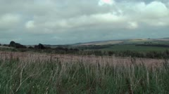 Country scene long grass blowing in the wind Stock Footage
