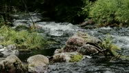Stock Video Footage of Low Angle of a Powerful Flowing Forest River