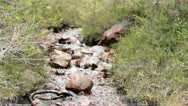 Stock Video Footage of Small Downhill River Stream