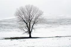 Lonely tree on snow covered field Stock Photos