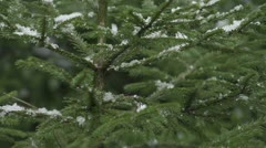 Decorating Christmas tree in nature - stock footage