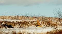 Excavator, dump truck, crow on a garbage dump Stock Footage
