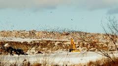 Excavator and packs of crows  on a garbage dump Stock Footage