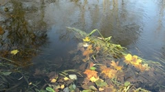 Close colorful autumn leaves forest park river brook water flow Stock Footage