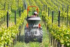 Framer is just spreading the dung with tractor in the vineyard Stock Photos