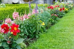 flower landscaping - stock photo