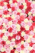 White and pink roses in arrangement Stock Photos