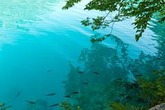 small fish shoal in azure lake - stock photo