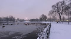 Time Lapse of Urban Bird Wildlife on Ice in London's Regent's Park with BT Tower - stock footage