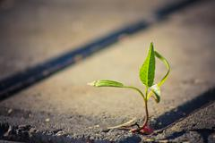 Tree growing through crack in pavement Stock Photos