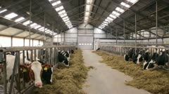 Pan of barn with cows Stock Footage