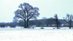Winter Background Countryside Snowy Landscape Stock Footage