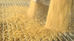 Corn at Ethanol plant - stock footage