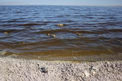 Salton Sea shore Stock Photos