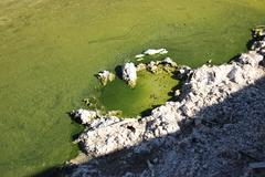 Stock Photo of Salton Sea green shorline