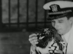 Man Puts His Head in Tiger's Mouth - Coney Island Stock Footage