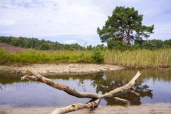 Little stream on heathland Stock Photos