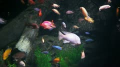 Aquarium in ocean world Stock Footage