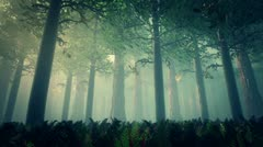 Deep Forest 2 720 - stock footage