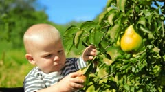 Child ripping off fruit from the tree Stock Footage