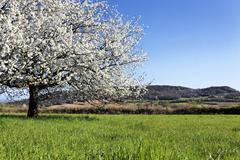 horizontal white tree - stock photo