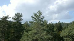 Aerial view of forest in the summer Stock Footage
