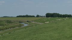 Sheep graze at sea dike Dollard, Groningen + zoom out landscape Stock Footage