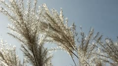 Weed grass against a sky Stock Footage