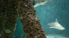 Shark tank Stock Footage