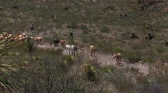 Drovers herding longhorns Stock Footage