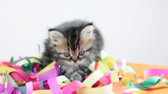 Group of small kittens playing Stock Footage