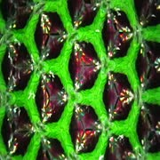 Kaleidoscope organic - royalty free video loops by chuck scott Stock Footage