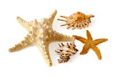 Starfish and shells Stock Photos