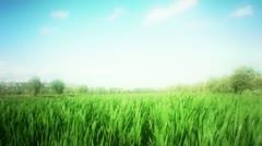Windy grass in field Stock Footage