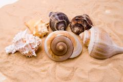 Seashells - stock photo