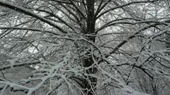 Heavy Snow on Linden Tree Stock Footage