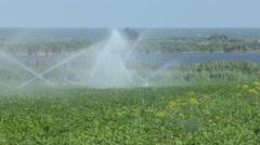 Irrigation Stock Footage