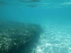 Vedenalainen Florida Keys Kuvituskuvat