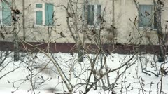Flock of waxwings in town at snowstorm.1080p Stock Footage