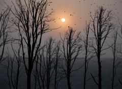 silhouettes of trees after the apocalypse - stock photo