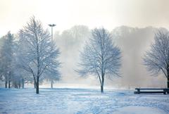 Winter landscape of frosty trees Stock Photos