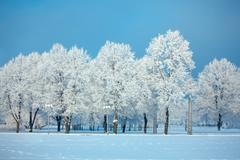 Frosted trees and grass against a blue sky Stock Photos