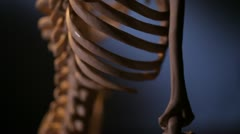 Human skeleton. Spine. Stock Footage