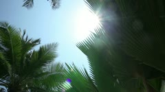 Palm trees agains blue sky - stock footage