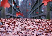 Stock Photo of falling leaves