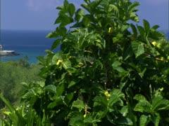 Sheraton Keauhou Bay Resort Stock Footage