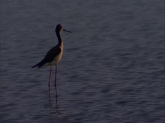 Sea Bird - stock footage